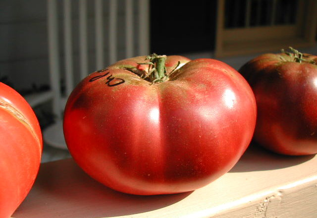 How the Cherokee Purple Tomato Got its Name