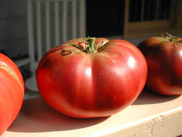 A beautiful ripe Cherokee Purple Tomato