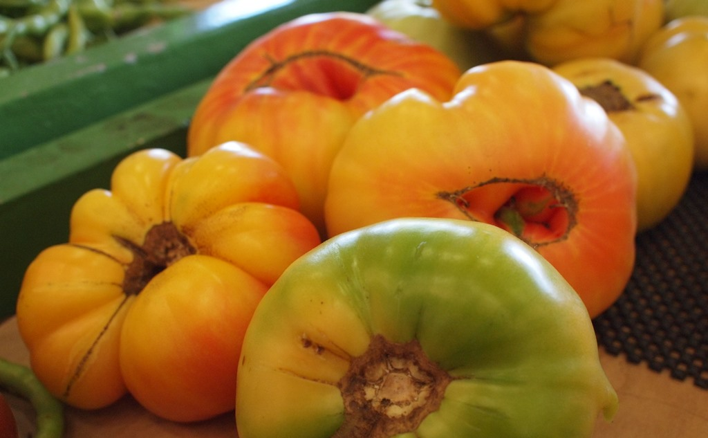 bicolor tomatoes