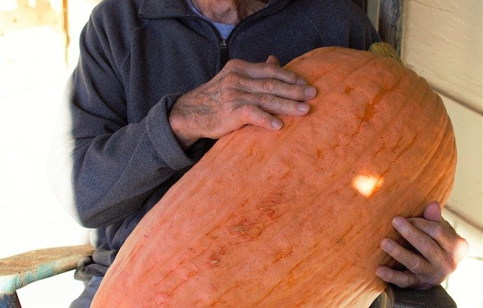 A Bit of History on the North Georgia Candy Roaster Squash